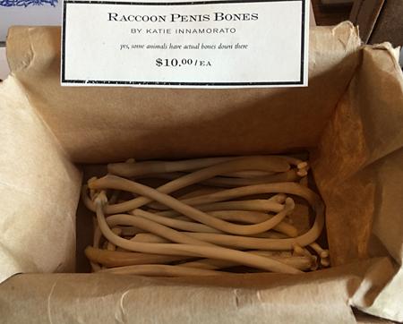 raccoon pnis bones