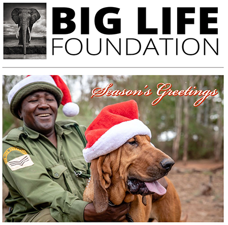 julkort från big life foundation